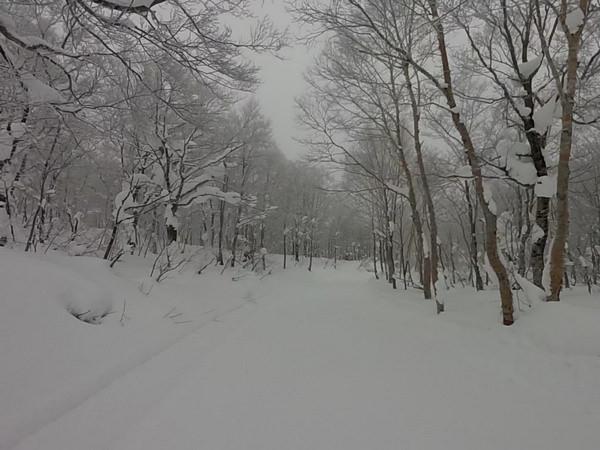 【日本田澤湖滑雪番外篇】Cat Tour搭乘壓雪車,挑戰秘境鬆雪滑道