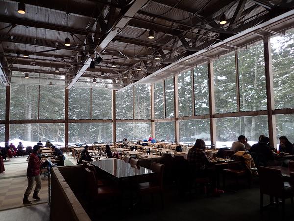 Tomamu星野度假村—超夢幻的森林餐廳,遇見幸運的綠光!