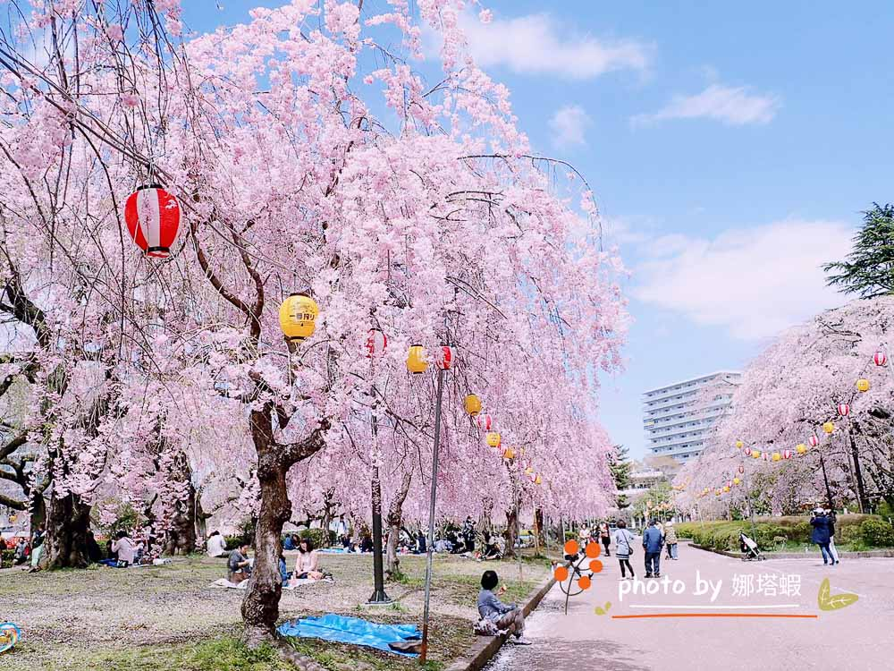 日本櫻花最前線!日本東北5個賞櫻好去處