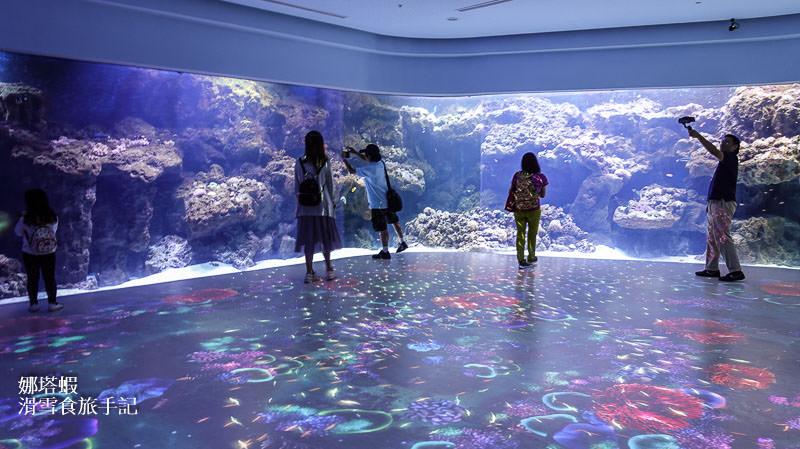 桃園XparK水族館︱夢幻水族箱、企鵝陪你喝咖啡︱必看魚群共舞、與眾同樂動物表演秀