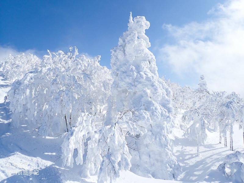 秋田阿仁滑雪場全攻略|賞樹冰、衝鬆雪,和秋田犬一起玩耍!